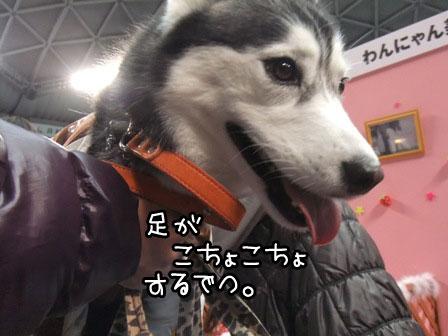 11_20120123203248.jpg