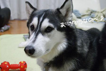 12_20100325213253.jpg