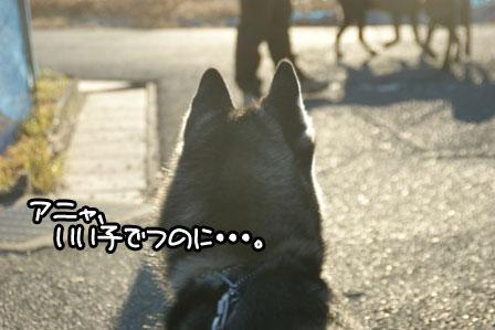 12_20110123161211.jpg