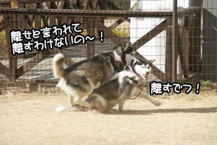 12_20110201193227.jpg