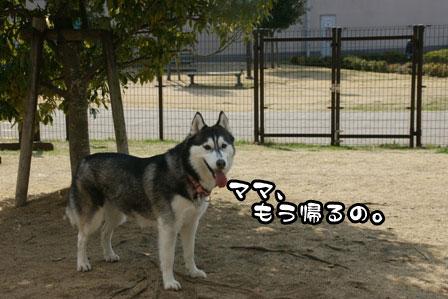 12_20110301203533.jpg