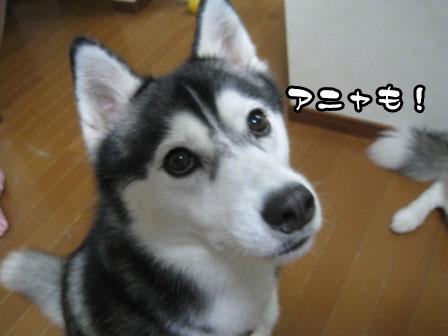 12_20110703224529.jpg