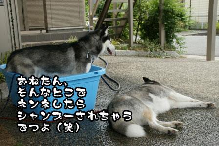 12_20110704210846.jpg