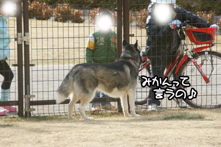 13_20110201193232.jpg