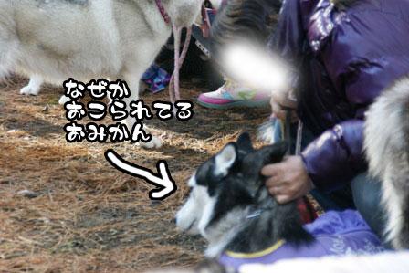 13_20111210192445.jpg