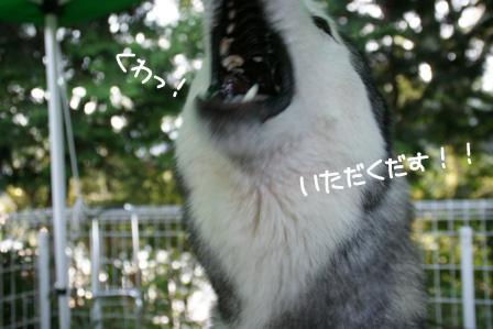 14_20100915213603.jpg