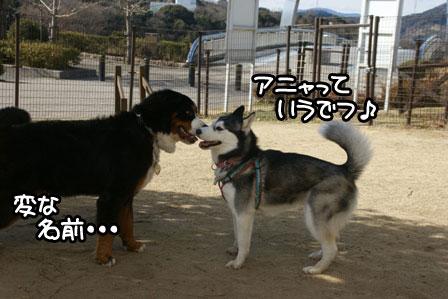 14_20110125185310.jpg