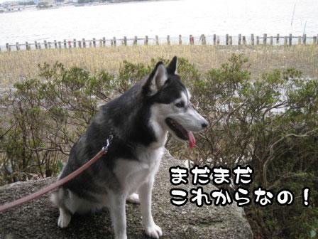 14_20110306200657.jpg