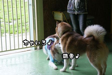 14_20110506204630.jpg