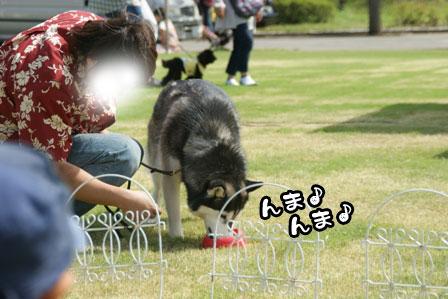 14_20111004210649.jpg