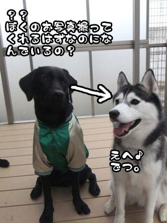 14_20111103215635.jpg