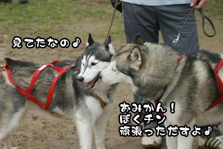 14_20111108003050.jpg