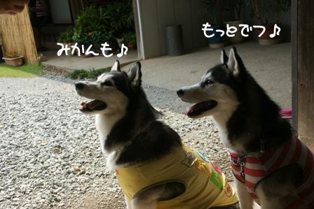 15_20100802205600.jpg