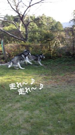 15_20101108203214.jpg