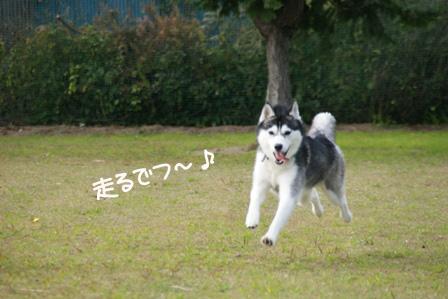 15_20101125213608.jpg