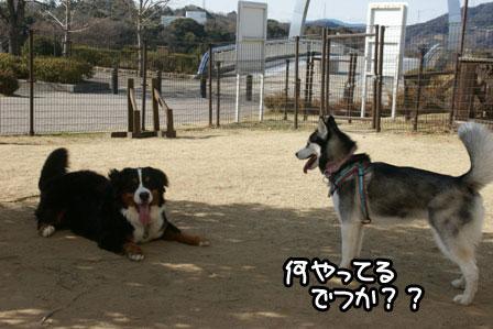 15_20110125185316.jpg