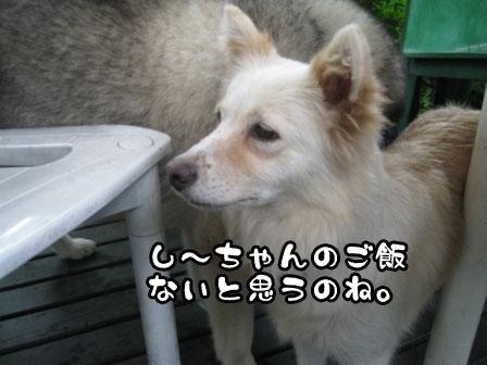 15_20110802210356.jpg