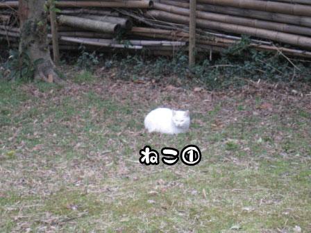 16_20110306200711.jpg