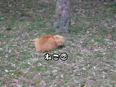 17_20110306200719.jpg