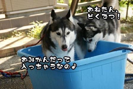 17_20110627215449.jpg