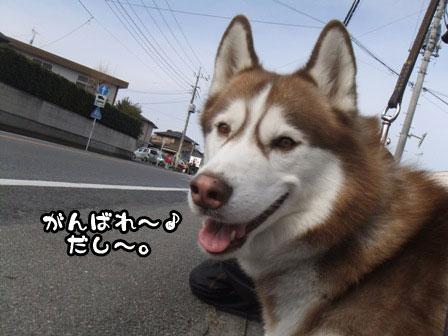 17_20120106200809.jpg
