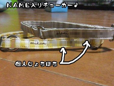 17_20120110210907.jpg