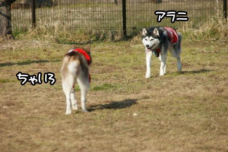 18_20110110205901.jpg