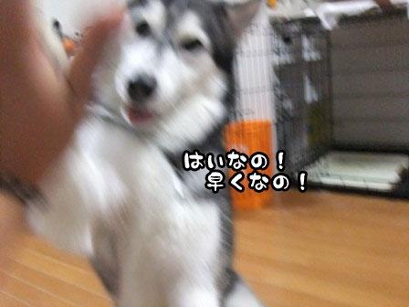 18_20111007204145.jpg