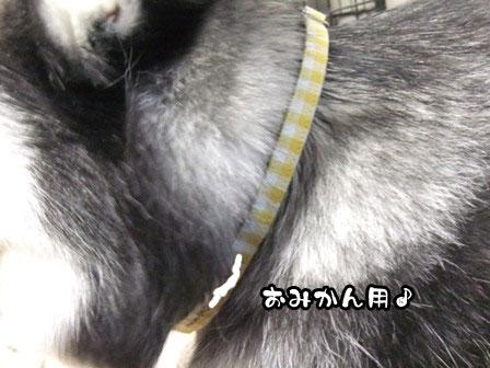 18_20120110210914.jpg