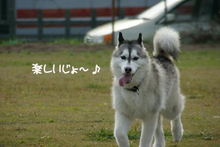 19_20101125213634.jpg