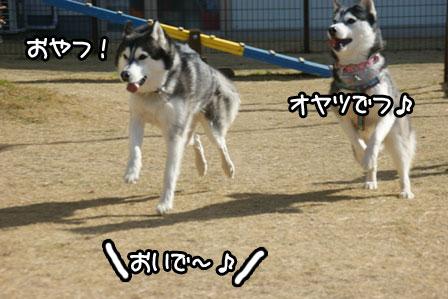 19_20110125185343.jpg