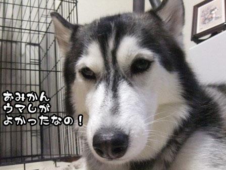19_20120110210919.jpg