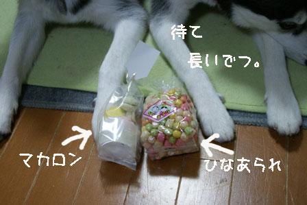 1_20100303205442.jpg