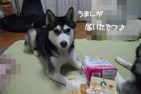 1_20100325213128.jpg