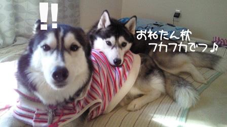 1_20101107200641.jpg