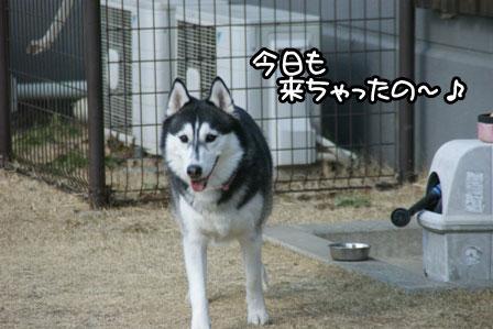 1_20110201193115.jpg