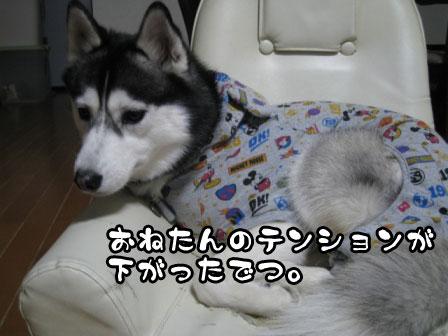 1_20110211192332.jpg