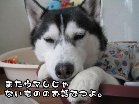 1_20110214211819.jpg