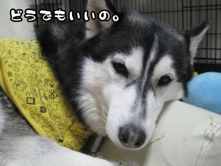 1_20110309212626.jpg