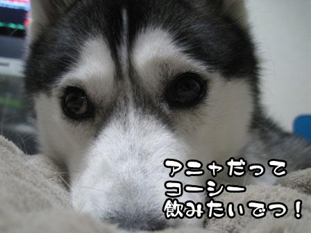 1_20110421201511.jpg