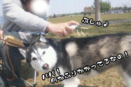 1_20110424204643.jpg