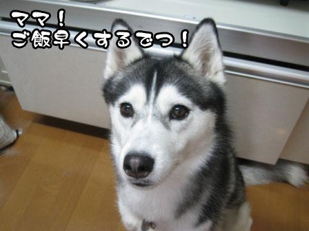 1_20110531214117.jpg
