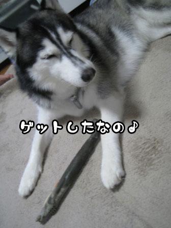 1_20110622211453.jpg