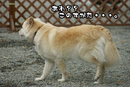1_20110628202242.jpg