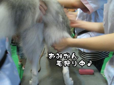 1_20110723200226.jpg