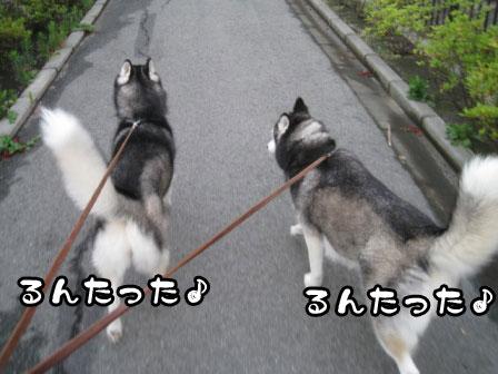 1_20110726200413.jpg