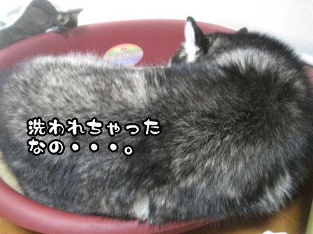 1_20110831205458.jpg
