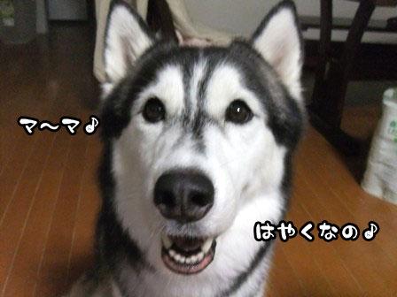 1_20110912211727.jpg