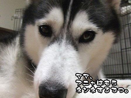 1_20110913214743.jpg