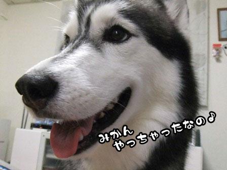 1_20110914204641.jpg